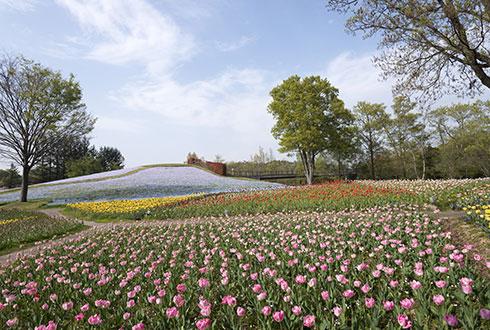국영 사누키 만노공원